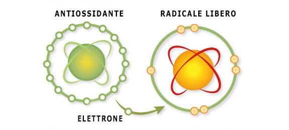 Radicali liberi, ben vita, antiossidanti